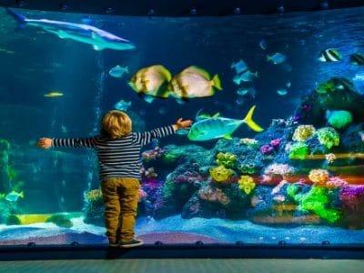 Sealife Oberhausen Kind vor Aquarium