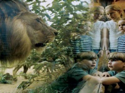 Zoom Erlebniswelt Löwe mit Kindern